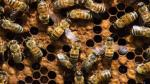2018-04-12  (updated 04-16)   Lawsuit blaming pesticides for bee deaths will go ahead, CP   (neonics, imidacloprid, PMRA)